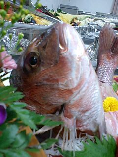 ぎょっ【魚】
