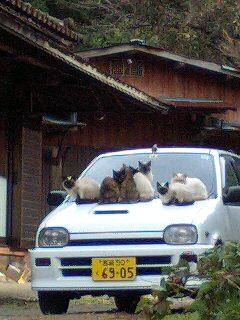 九州で見かけたもの