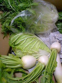 R1さん栽培野菜