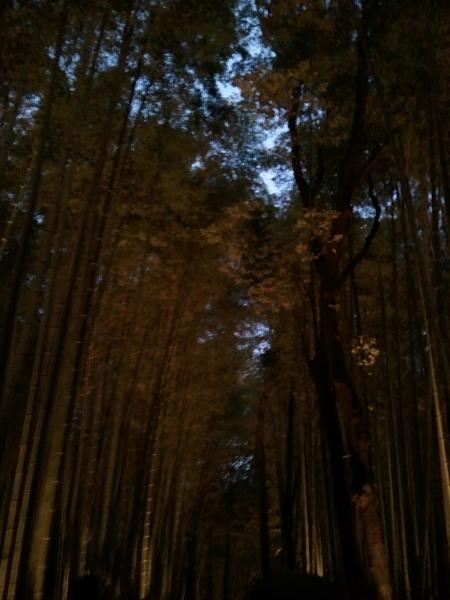 竹林の小道ライトアップ