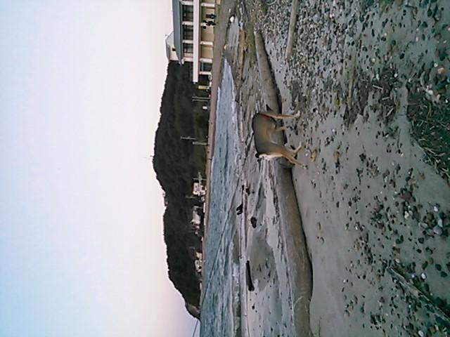 海辺のそらさん