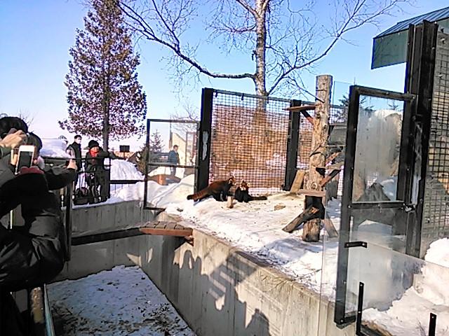 旭川動物園の動物達